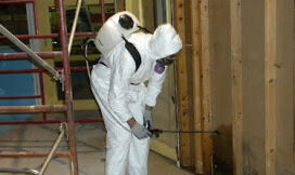 Catstrong Mold Inspection and Removal Indianapolis